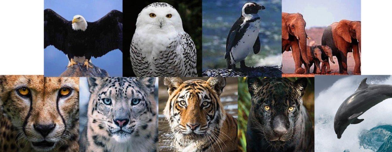 animals goodwill meditation danielle van de velde
