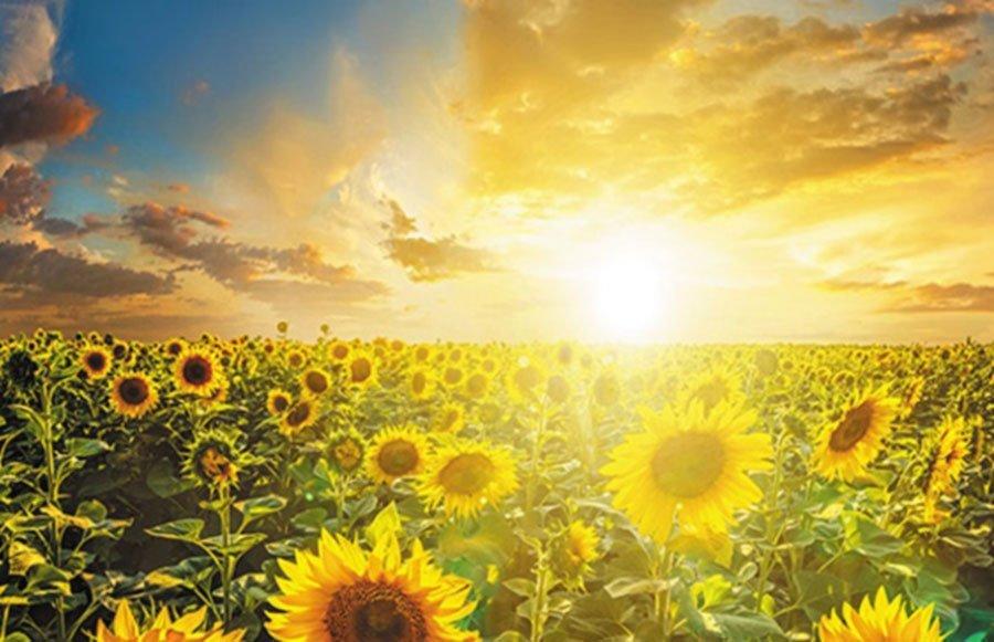 gratitude the solstice upswing danielle van de velde